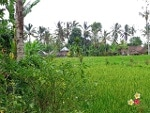 Foto Land for sale in Payangan Gianyar IDR 2405000-....