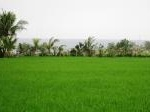 Foto For sale land 7 are view laut in ciputra street...