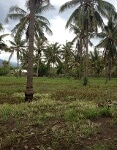 Foto Land for sale in Lembar Lombok Barat IDR...