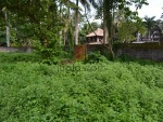 Foto Land in Central Ubud, 20 ares near the Monkey...