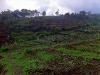Foto Land for sale in Ngamprah Bandung IDR 300000.000
