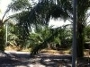 Picture Sungai Siput Perak factory and land for sale