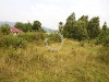 Picture NT land empty for 3 bunglo house penampang