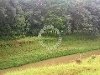 Picture Freehold, 5.5 acres, Ulu Yam