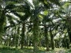 Picture Johor kahang oil palm land sales