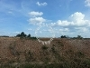 Picture NEW Industrial Land at Taman Industrial Bkt...