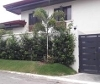Picture 4 bedroom House and Lot For Rent in BF Homes...