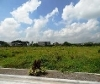 Picture Lot For Sale in Angeles City for ₱ 1,728,000...