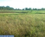 Picture Land and Farm For Sale in San Ildefonso for ₱...