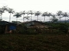 Picture Residential property for sale in Malaybalay,...