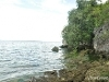 Picture Residential Land/Lot for sale in Dalaguete