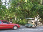 Picture Residential In Lot 20 Block 8, Eucalyptus St,...