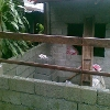 Picture House and lot in rodriguez rizal