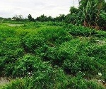 Picture Lot For Sale in Sindalan for ₱ 850,000 with web...