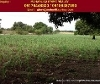 Picture Land and Farm For Sale in Calatagan for ₱...
