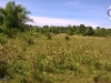 Picture Dauis, Panglao, Bohol Lot for Sale (1 hectare...