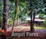 Picture Land and Farm For Sale in Angat for ₱ 6,500,000...