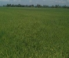 Picture Land and Farm For Sale in Polangui for ₱...