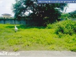 Picture Lot for Sale TCT Property New Ad!
