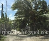 Picture Land and Farm For Sale in Tagum City for...