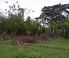 Picture Lot For Sale in Tagbilaran City for ₱ 858,600...