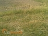 Picture 10 Marla Plot, Golf Residencia, Bahria Town,...