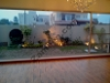 Picture 2 kanal brand new bungalow for sale