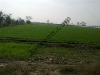 Picture 12.2 Acre Land On Main Toba-Kamalia GT Road