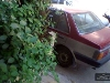 Picture Nissan Sunny for Sale in Karachi